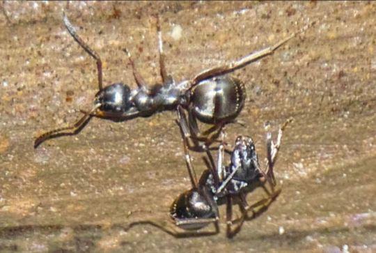 Ants June 2018