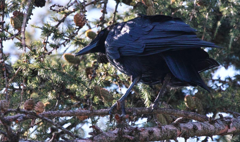 crows feet